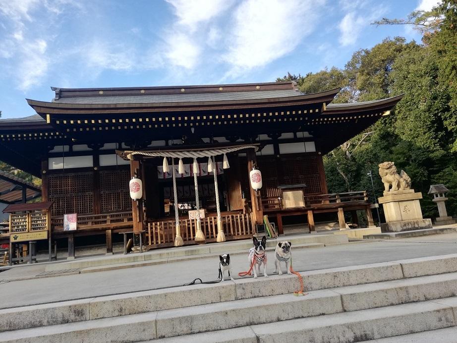 北野~弓弦羽神社、そして、今年最後のワン連れお出掛け_d0155952_15030692.jpg