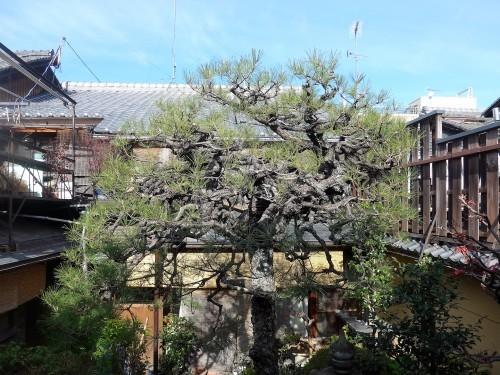 京都・今出川「西陣 鳥岩楼」へ行く。_f0232060_21250542.jpg
