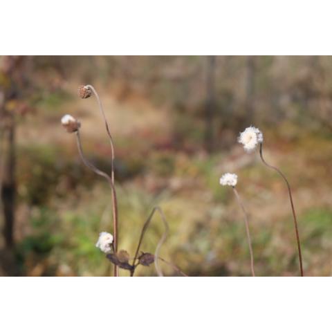 冬の庭𓂃 𓈒𓏸◌_a0161718_17523590.jpg