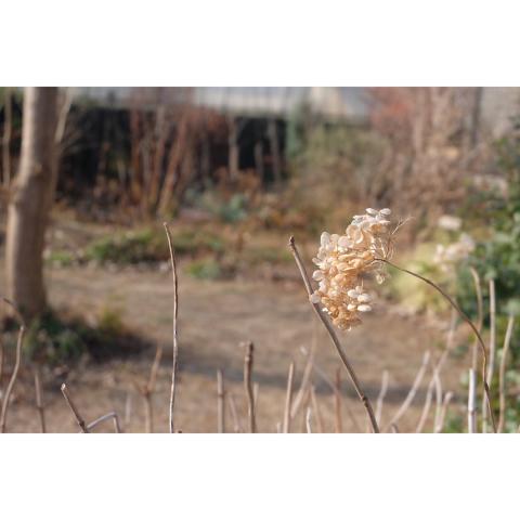 冬の庭𓂃 𓈒𓏸◌_a0161718_17530172.jpg