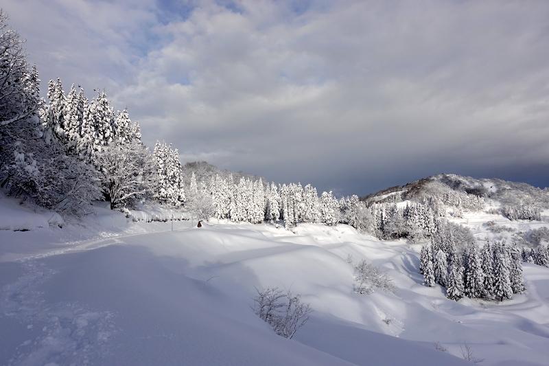 雪 2020 - Part 2_d0010432_22060986.jpg