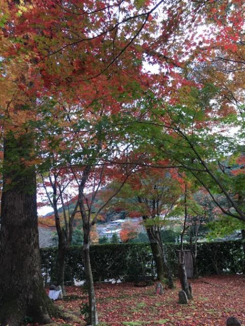 2020年秋の京都へ⑩あだしの念仏寺_f0146587_21404551.jpg