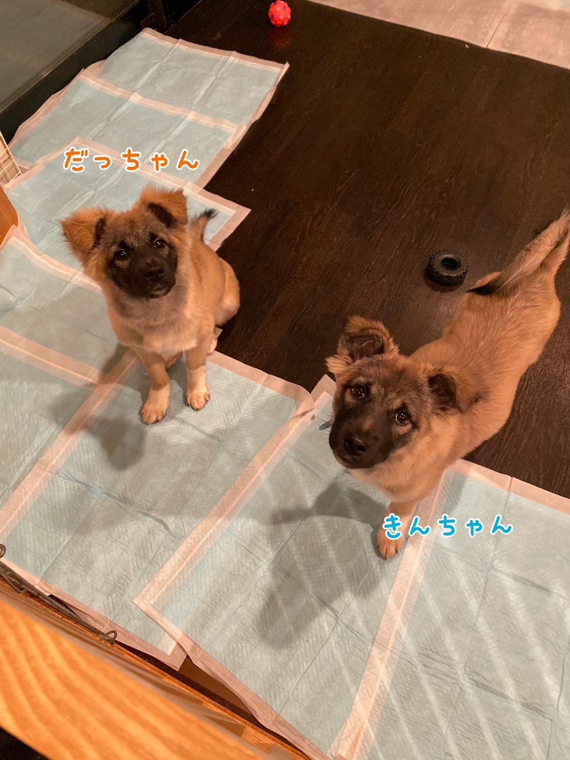 シアワセ報告~だてまき~_b0207320_15414056.jpg