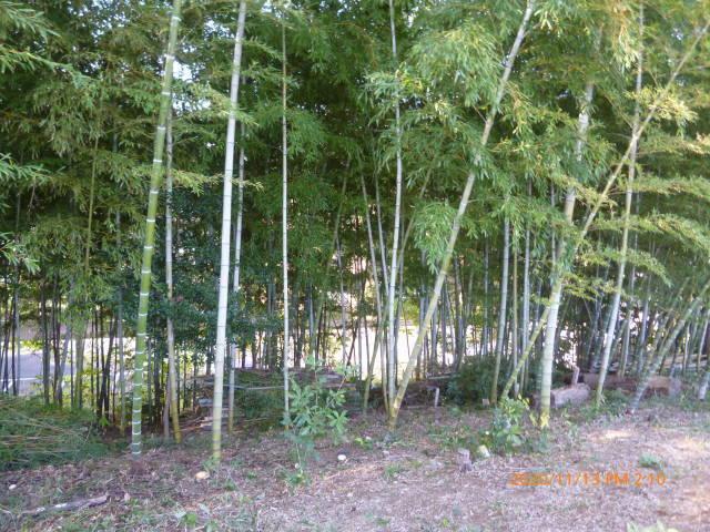 2020 年の締めくくり 竹林整備の報告など    高 野 史 郎_b0199122_23265463.jpg