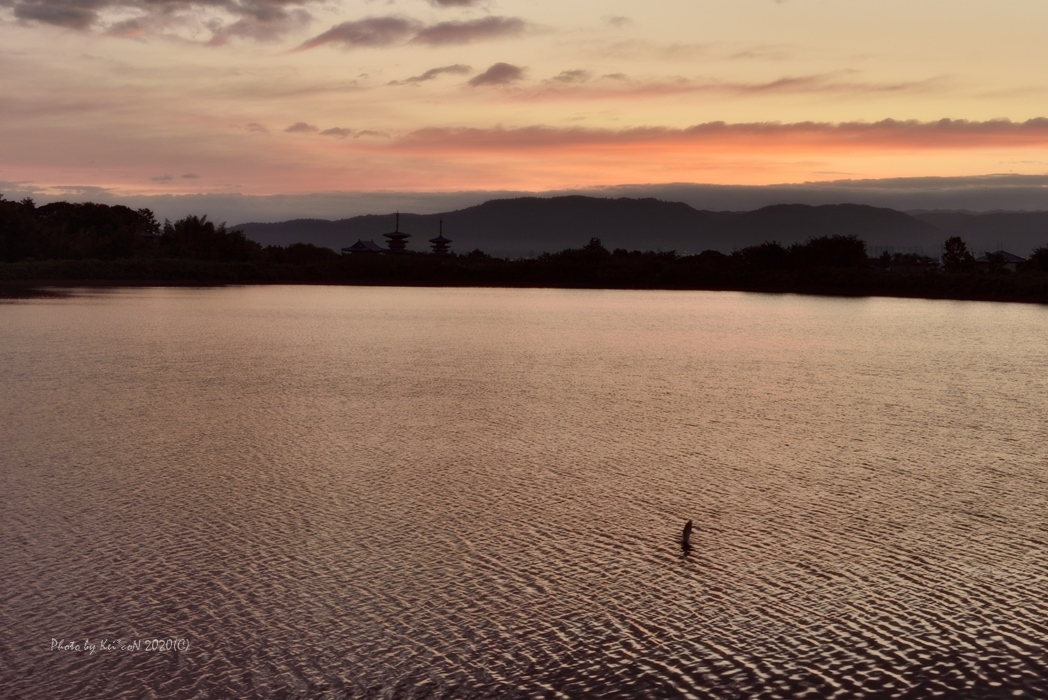 大きな鯉の跳ねた朝 @ 大池 _a0212036_16195521.jpg