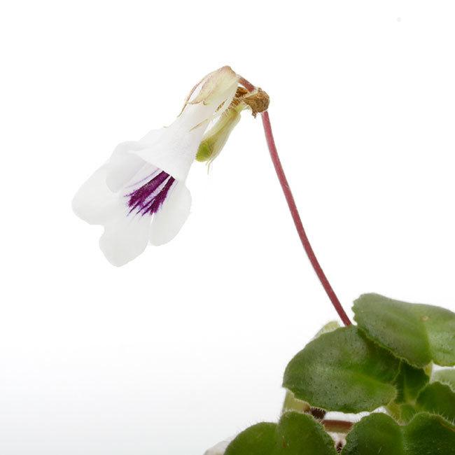 大晦日というのに植物などの情報をご紹介~_d0376039_15064130.jpg