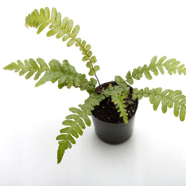 大晦日というのに植物などの情報をご紹介~_d0376039_15112129.jpg