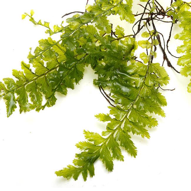 大晦日というのに植物などの情報をご紹介~_d0376039_15264976.jpg
