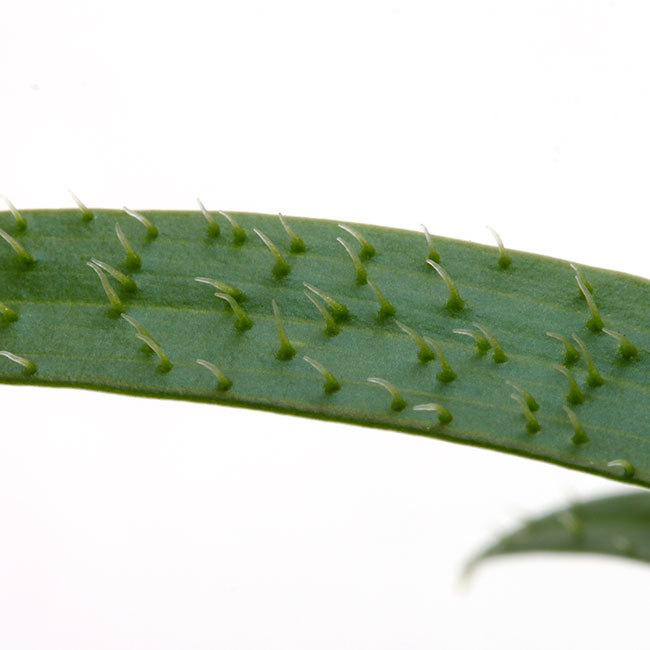 大晦日というのに植物などの情報をご紹介~_d0376039_15583952.jpg