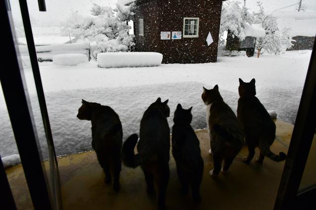 雪の大晦日 12/31_b0214652_17144200.jpg