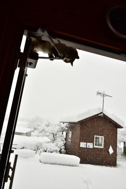 雪の大晦日 12/31_b0214652_17152689.jpg