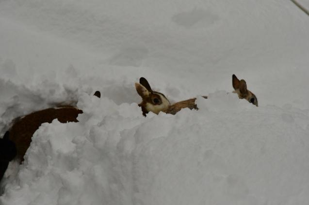 雪の大晦日 12/31_b0214652_17192048.jpg