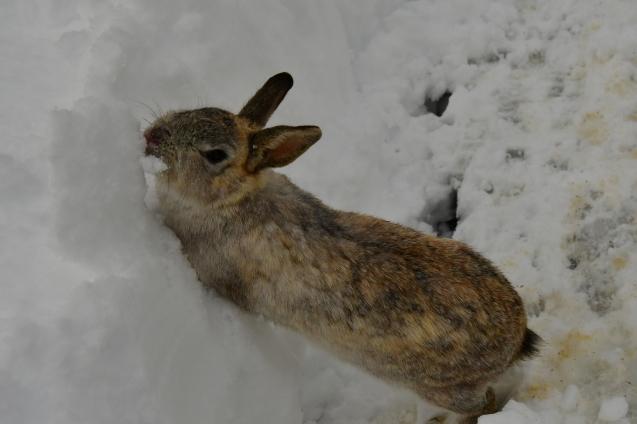雪の大晦日 12/31_b0214652_17193952.jpg