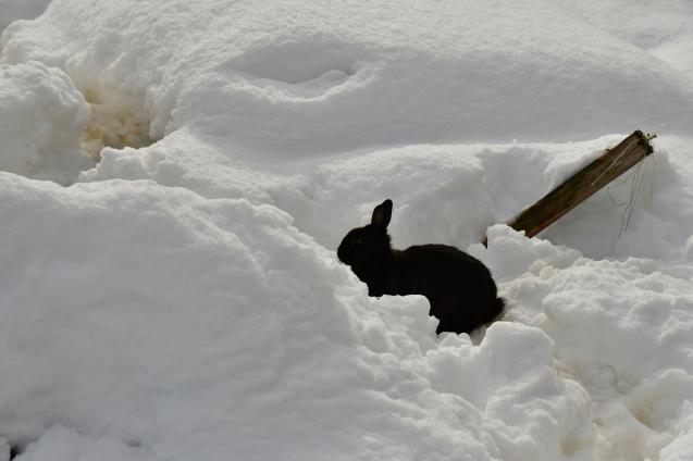 雪の大晦日 12/31_b0214652_17195909.jpg