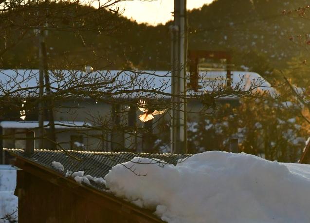 雪の大晦日 12/31_b0214652_17313798.jpg