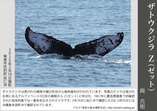 12/31 よいお年を_a0010095_12501912.jpg