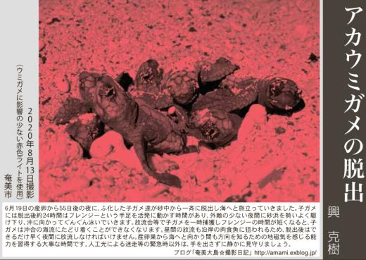12/31 よいお年を_a0010095_12534399.jpg