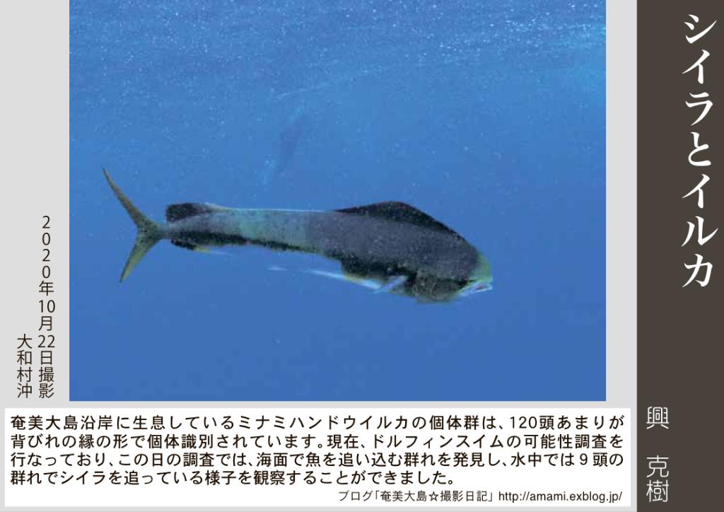 12/31 よいお年を_a0010095_12541912.jpg