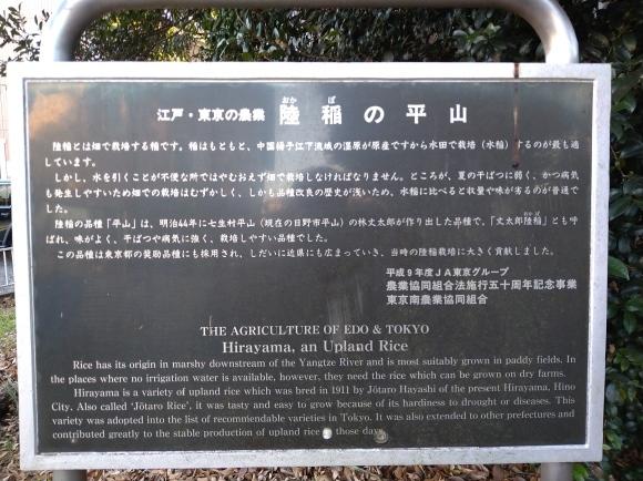 1/1 初詣&新春ウォーキング@ひとり_b0042308_20071363.jpg