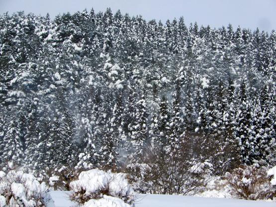 雪と空_d0366590_15131923.jpg