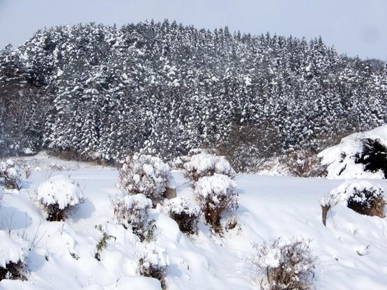 雪と空_d0366590_15131998.jpg