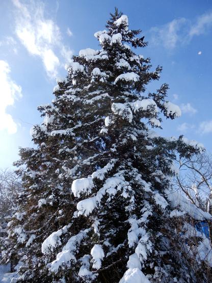 雪と空_d0366590_15132083.jpg