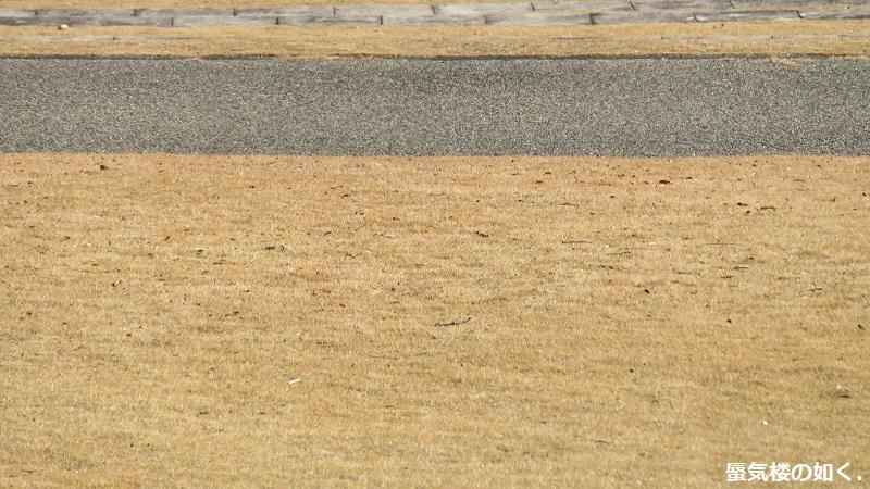 「神様になった日」舞台探訪009 第09話「神殺しの日」山梨市笛吹川フルーツ公園_e0304702_11594846.jpg