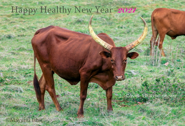 HAPPY HEALTHY NEW YEAR 2021 - Resilience -_a0086851_16313253.jpg