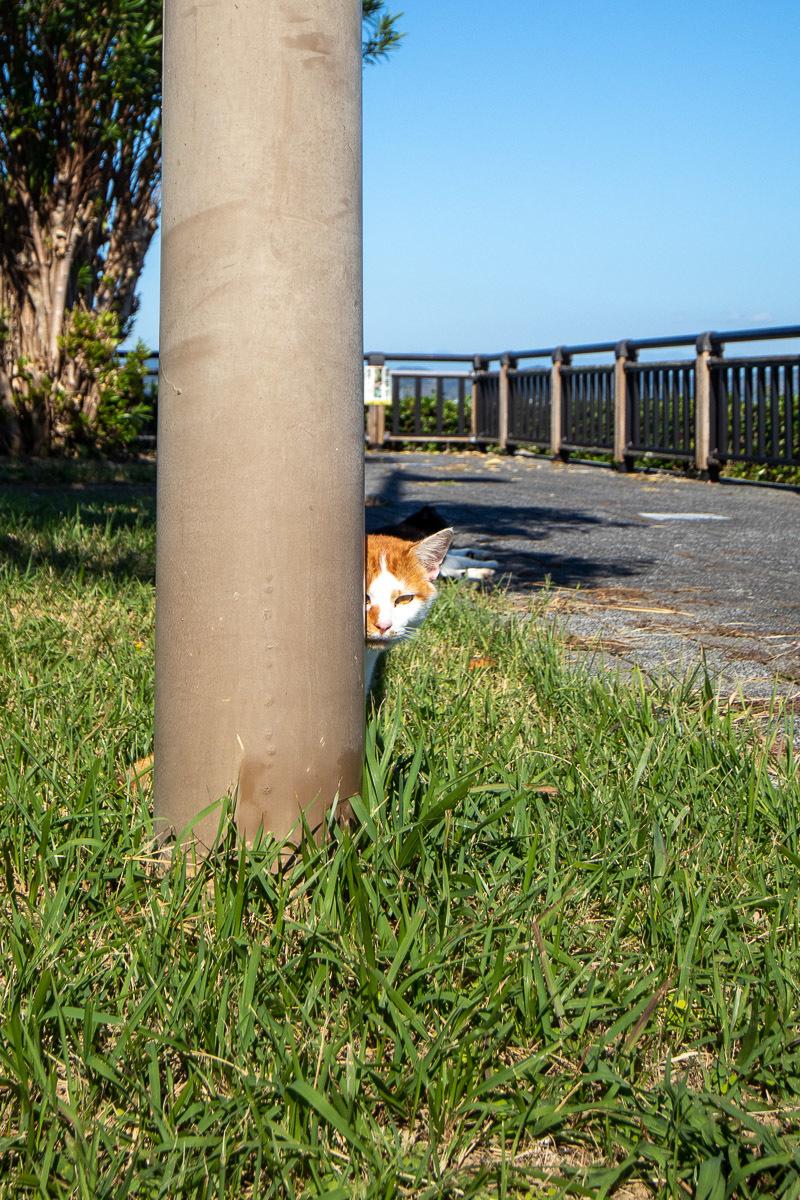 須崎市で鍋焼きラーメンの後は、土佐市で猫と遊ぶ その3_a0077663_15100748.jpg