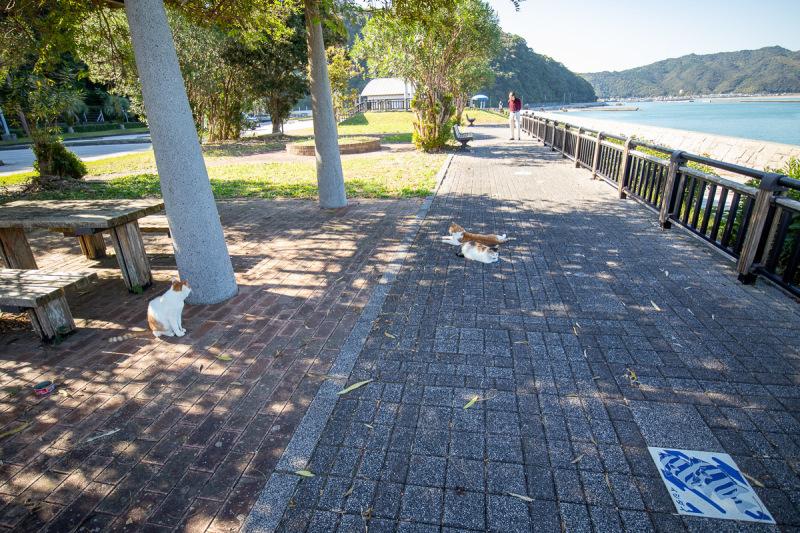 須崎市で鍋焼きラーメンの後は、土佐市で猫と遊ぶ その3_a0077663_15101926.jpg