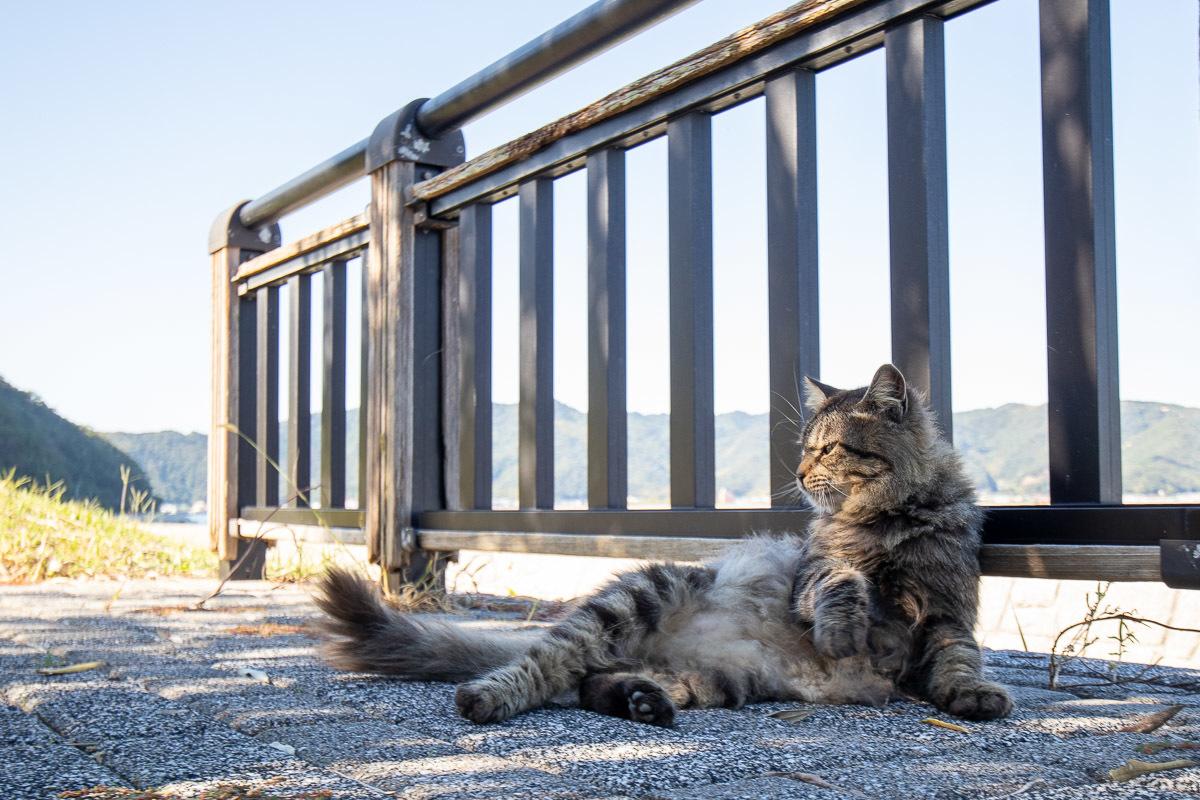 須崎市で鍋焼きラーメンの後は、土佐市で猫と遊ぶ その3_a0077663_15102301.jpg