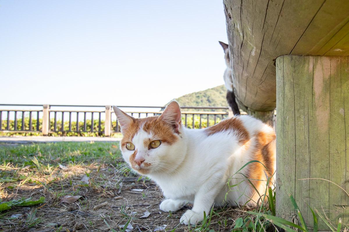須崎市で鍋焼きラーメンの後は、土佐市で猫と遊ぶ その5_a0077663_15252030.jpg