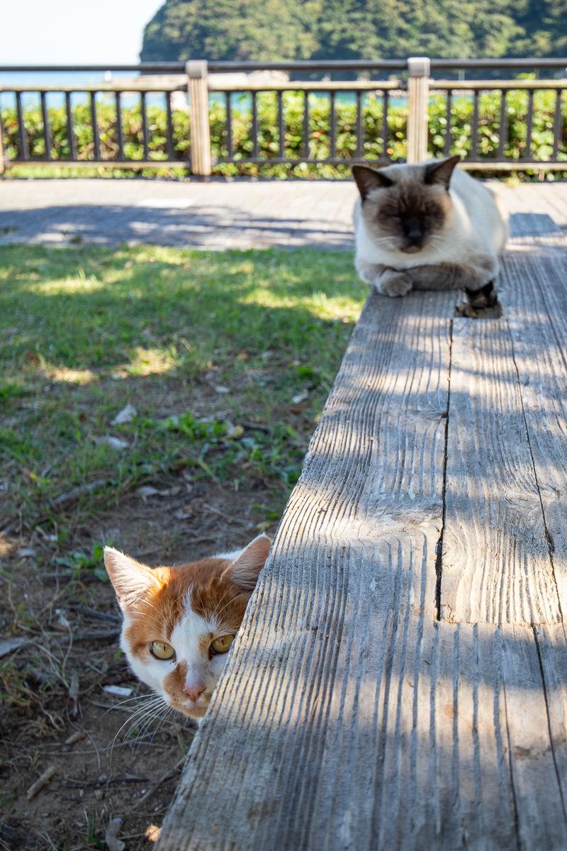 須崎市で鍋焼きラーメンの後は、土佐市で猫と遊ぶ その5_a0077663_15252067.jpg