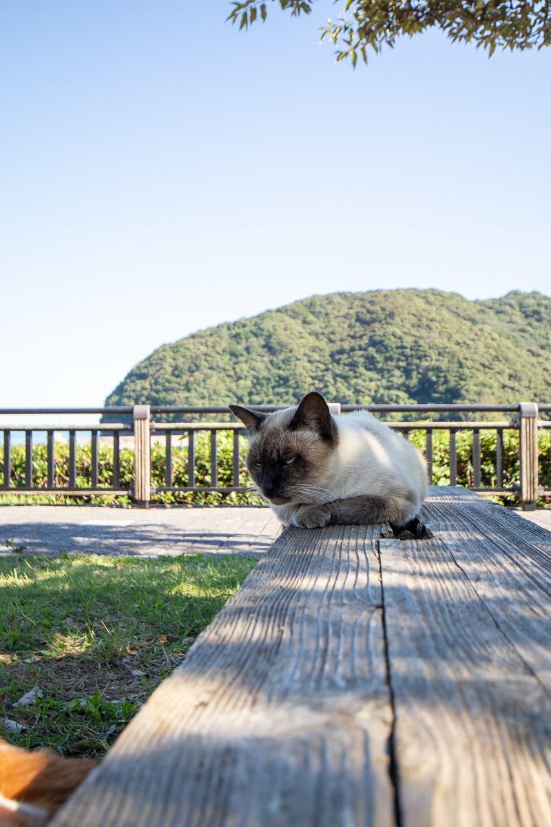 須崎市で鍋焼きラーメンの後は、土佐市で猫と遊ぶ その5_a0077663_15252088.jpg