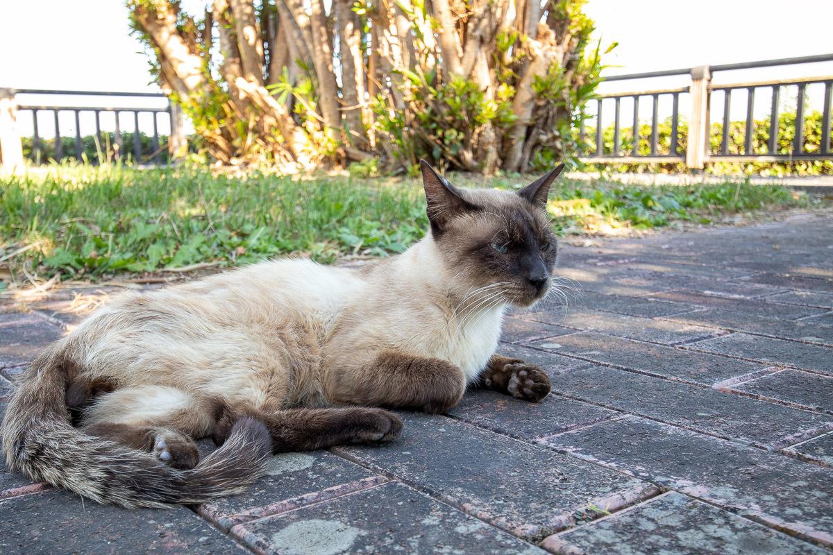 須崎市で鍋焼きラーメンの後は、土佐市で猫と遊ぶ その5_a0077663_15252157.jpg