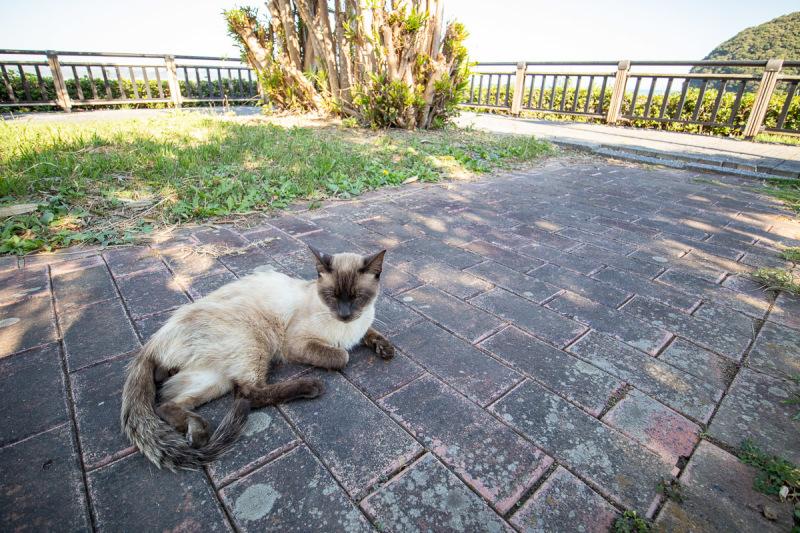 須崎市で鍋焼きラーメンの後は、土佐市で猫と遊ぶ その5_a0077663_15252178.jpg