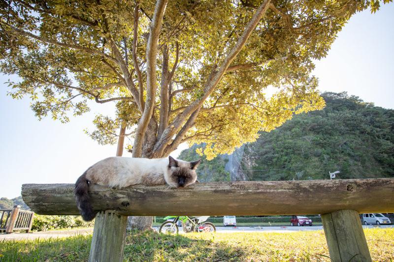 須崎市で鍋焼きラーメンの後は、土佐市で猫と遊ぶ その5_a0077663_15252206.jpg