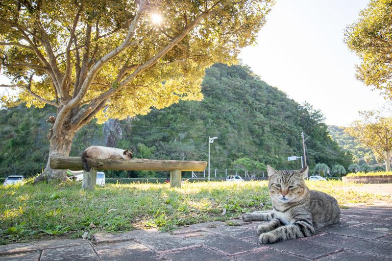 須崎市で鍋焼きラーメンの後は、土佐市で猫と遊ぶ その5_a0077663_15253282.jpg
