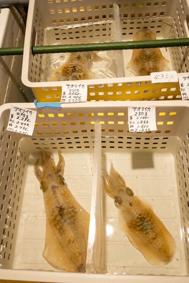 田中鮮魚店で、美味しい戻り鰹を食べる その2_a0077663_17202983.jpg