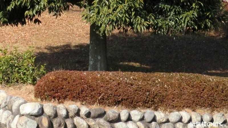 「神様になった日」舞台探訪009 第09話「神殺しの日」山梨市笛吹川フルーツ公園_e0304702_20091156.jpg