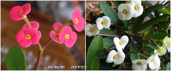 新年は今日から U君の帰京歓迎_c0051105_16344072.jpg