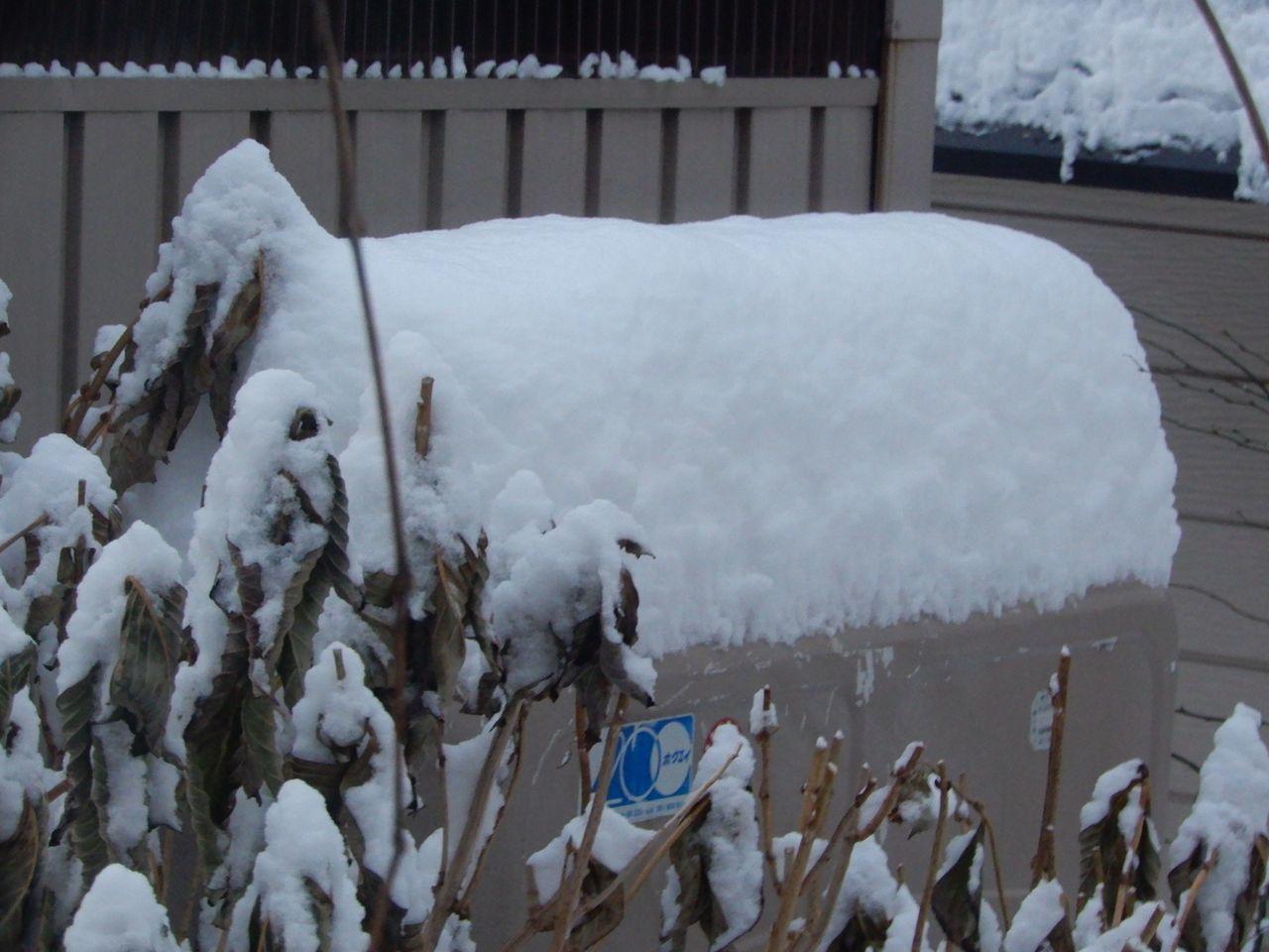 今季一番の降雪_c0025115_21525065.jpg