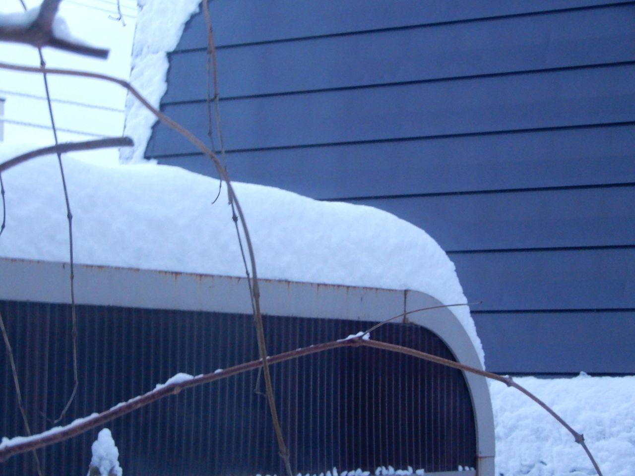 今季一番の降雪_c0025115_21525383.jpg