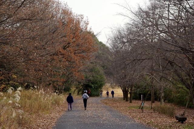 緑道を行く_b0191026_09521491.jpeg