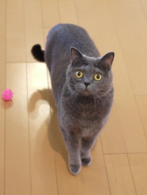 猫のお留守番 ちゃちゃちゃん編。_a0143140_19154193.jpg