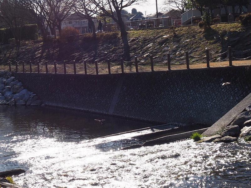 【カメラ散歩】武蔵野の風情・柳瀬川と清瀬金山緑地公園_b0008655_15525168.jpg