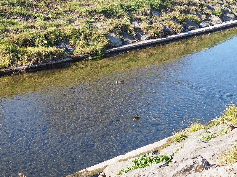 【カメラ散歩】武蔵野の風情・柳瀬川と清瀬金山緑地公園_b0008655_15530973.jpg