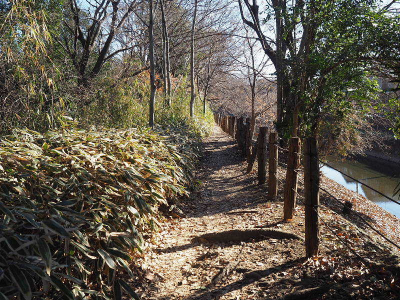 【カメラ散歩】武蔵野の風情・柳瀬川と清瀬金山緑地公園_b0008655_15541142.jpg
