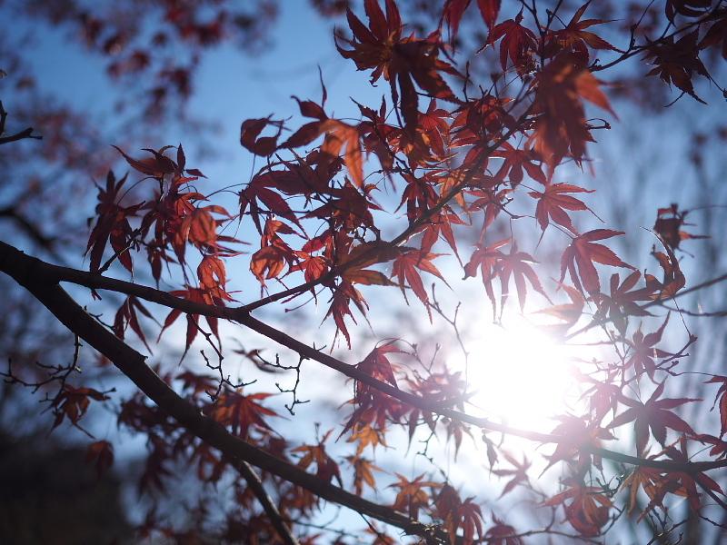 【カメラ散歩】武蔵野の風情・柳瀬川と清瀬金山緑地公園_b0008655_15570003.jpg