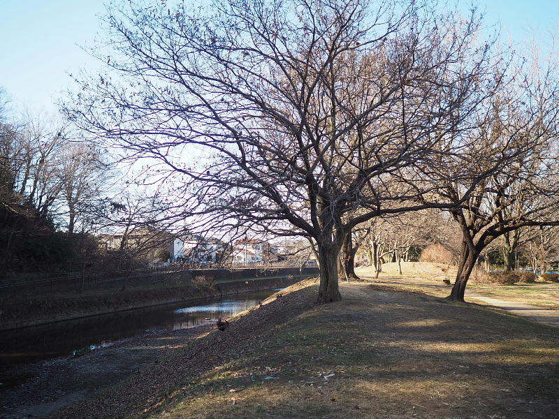 【カメラ散歩】武蔵野の風情・柳瀬川と清瀬金山緑地公園_b0008655_15571984.jpg